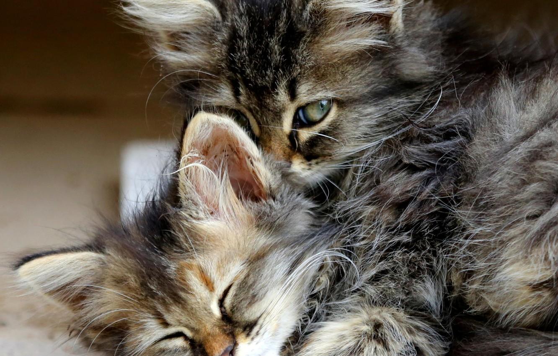 Картинки кошек обнимашек