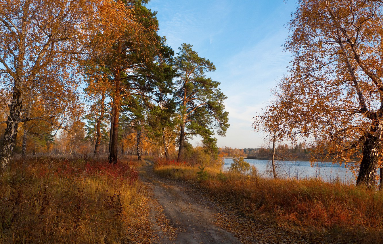 Фото обои forest, river, trees, Autumn, autumn mood, trace, fallen leafs
