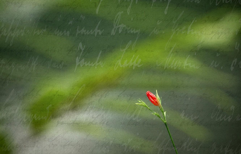 Фото обои цветок, стиль, фон, надпись