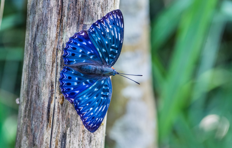 Фото обои макро, природа, дерево, Бабочка, синяя