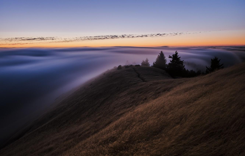 Фото обои лес, небо, туман, вечер, утро, Калифорния, США