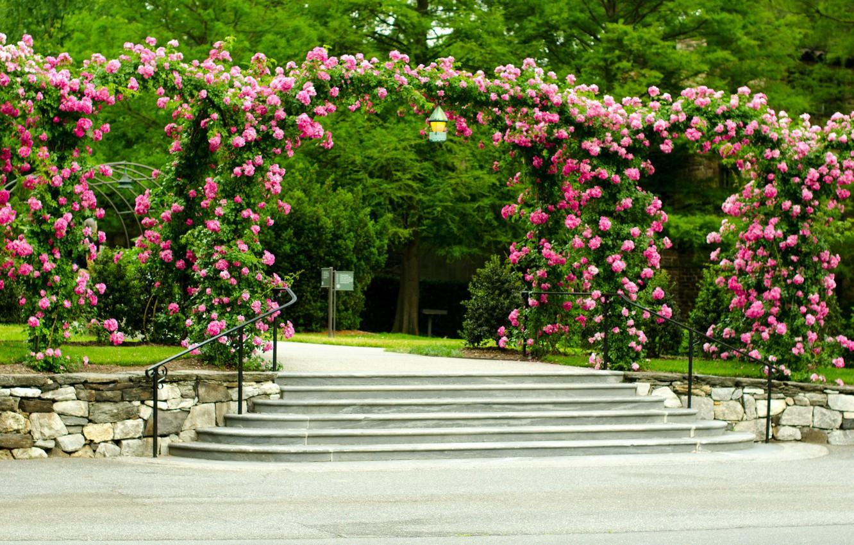 последнее время красивые фотографии цветочных аллей зарабатывают миллионы
