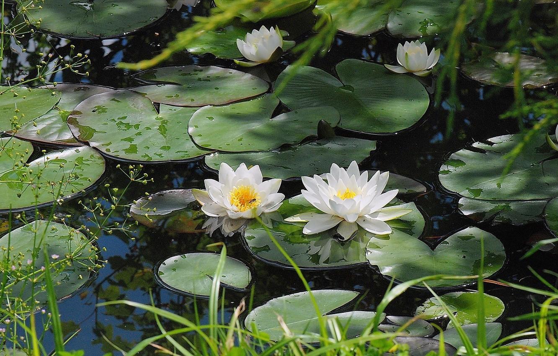 Растения пресноводных водоемов фото