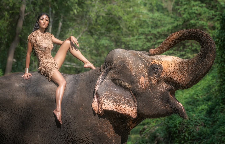 Фото обои лето, взгляд, девушка, природа, лицо, слон, платье, ножки, красотка, хобот
