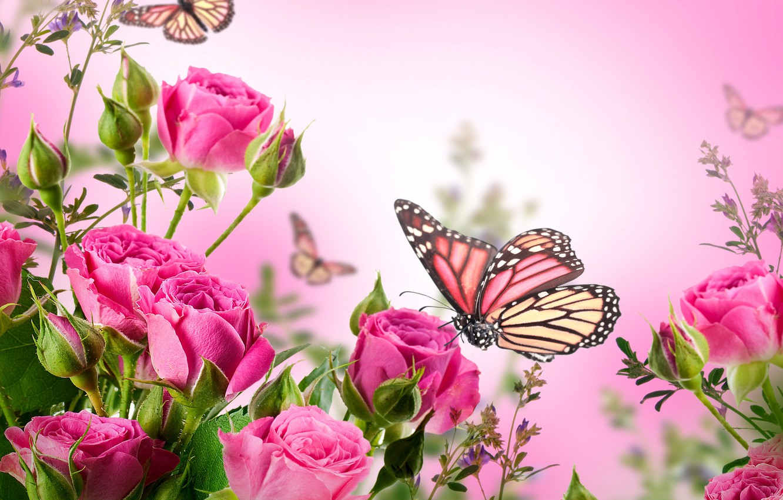 Фото обои бабочки, цветы, розы, цветение, pink, blossom, flowers, beautiful, roses, butterflies