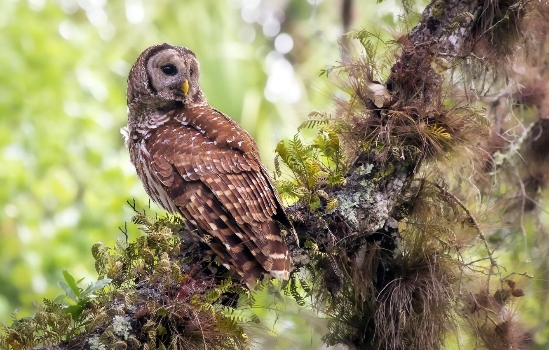 Фото обои лес, природа, сова, птица