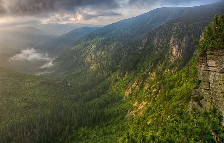 Фото обои лес, горы, туман, река, утро, долина