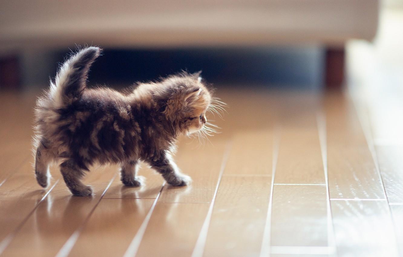 Обои котёнок, daisy, Кошка, ben torode. Кошки foto 12