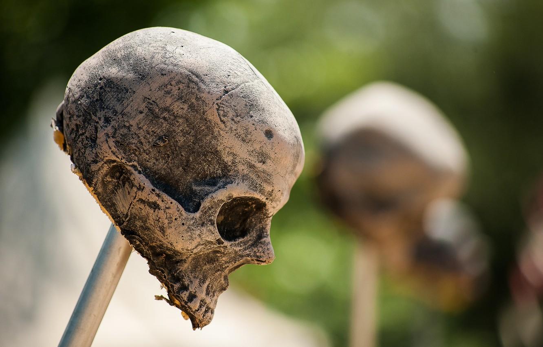 Обои череп, фон, makro. Разное foto 19