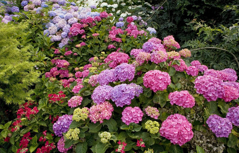 Фото обои зелень, лес, цветы, куст, клумба