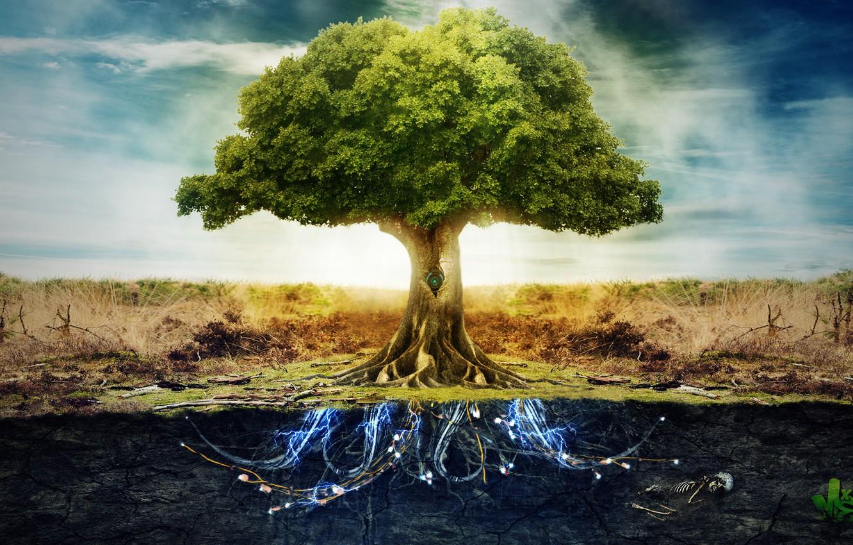 Обои небо, корни, земля, Дерево, электричество картинки на рабочий стол,  раздел фантастика - скачать