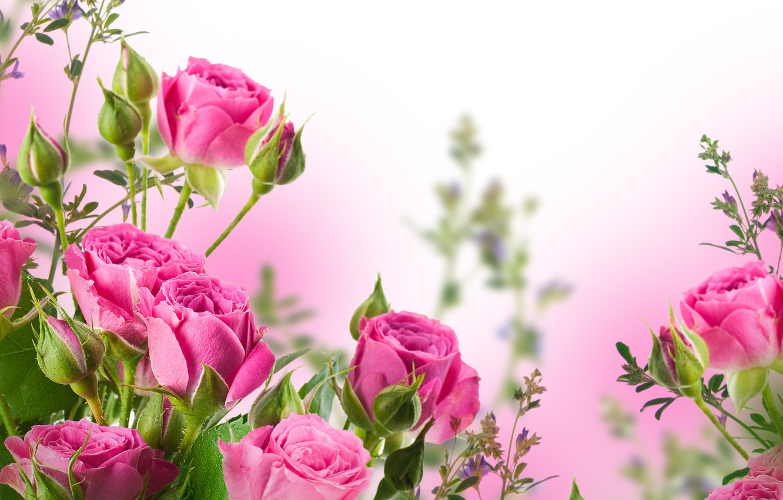 Фото обои цветы, букет, лепестки, бутоны, розовые розы