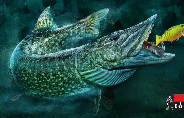 Фото обои рыбалка, рыба, приманка, щука