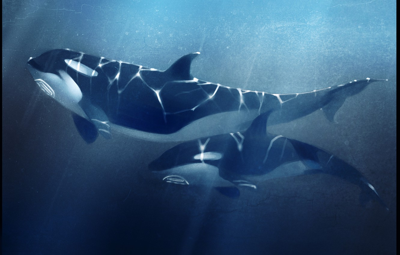 Фото обои море, глубина, касатка, orcas