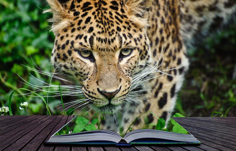 Фото обои заросли, хищник, джунгли, леопард, книга, 3d