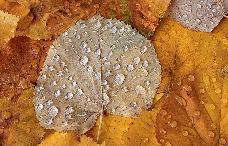 Фото обои осень, листья, капли, Autumn leaves