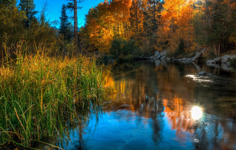 Фото обои осень, небо, трава, деревья, озеро, камни
