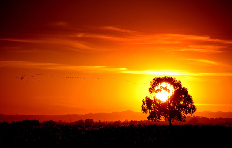 оранжевый рассвет фото фотоаппаратов могут владеть