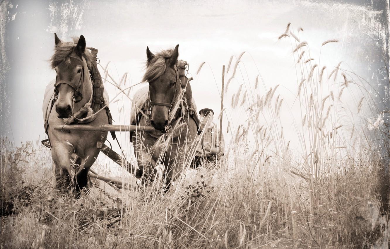 Фото обои поле, стиль, фон, кони, повозка