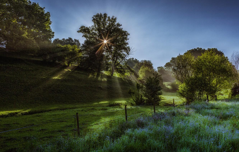 Фото обои grass, tree, rays, morning, sun, fog, mist