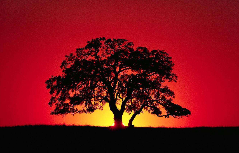 Фото обои небо, лучи, закат, дерево, горизонт, силуэт