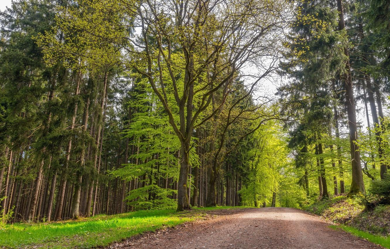 Фото обои дорога, лето, деревья