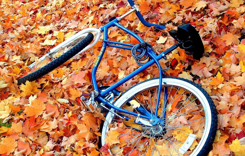Фото обои осень, листья, желтый, велосипед, велик, брошенный