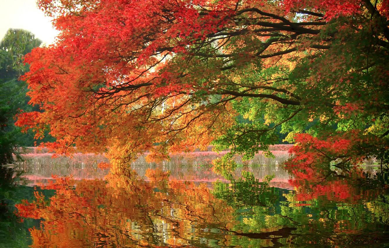 Фото обои осень, деревья, озеро, парк, отражение, ветви