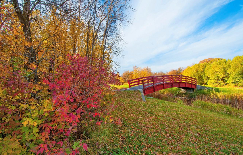 Фото обои осень, небо, листья, облака, деревья, парк, ручей, мостик, багрянец