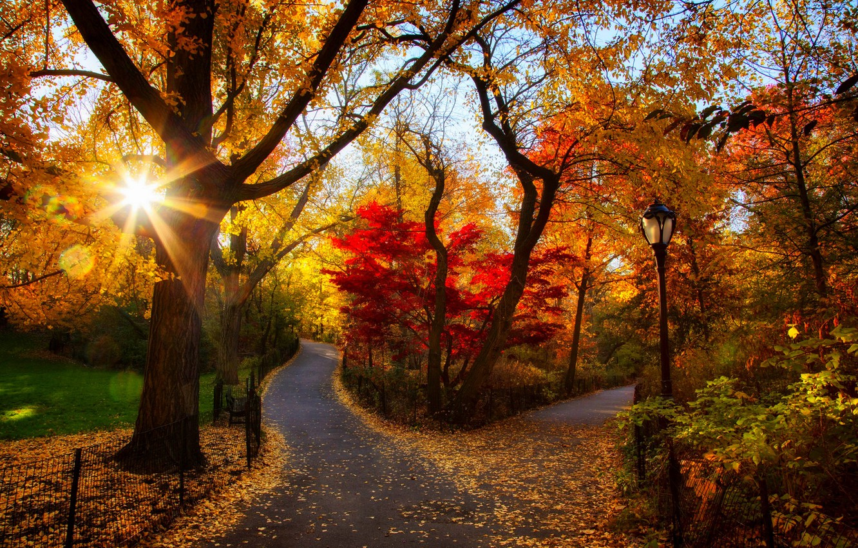 Фото обои дорога, осень, лес, листья, деревья, закат, природа, парк, colors, colorful, forest, road, trees, nature, sunset, …
