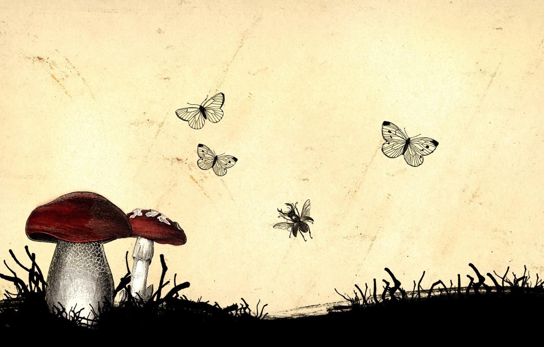 Фото обои насекомые, грибы, Рисунок
