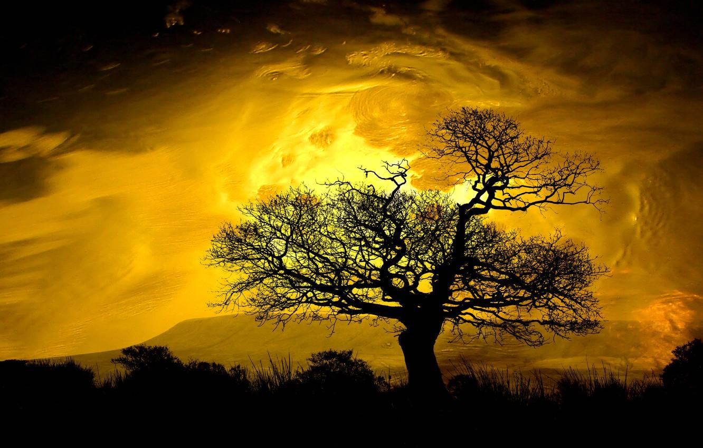 Фото обои небо, облака, горы, дерево, силуэт, зарево