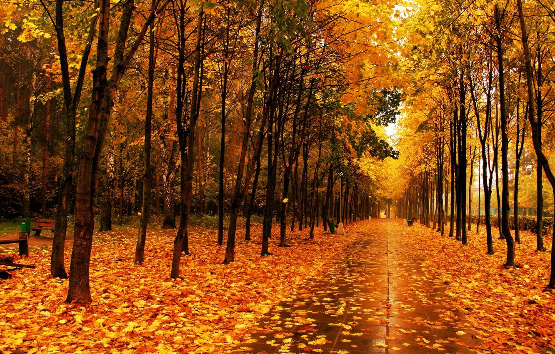 Фото обои листья, деревья, парк, Осень, аллея
