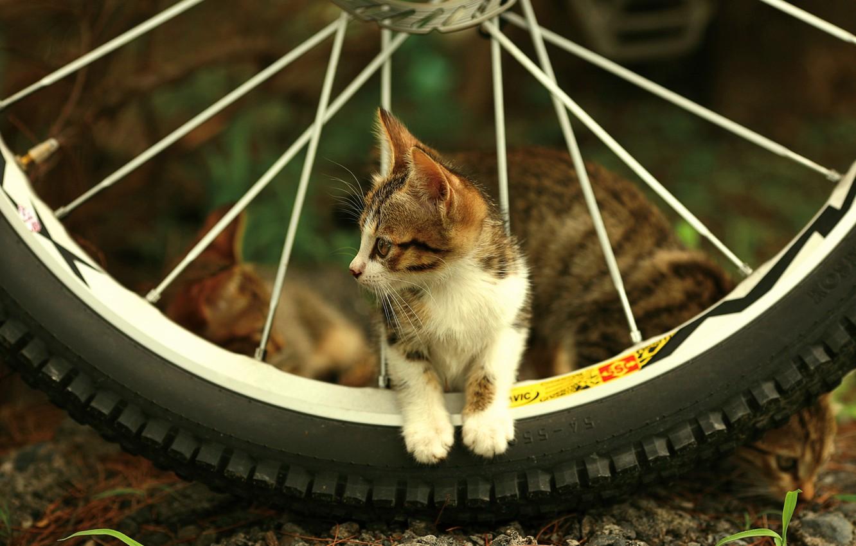 Фото обои взгляд, котенок, колесо, спицы