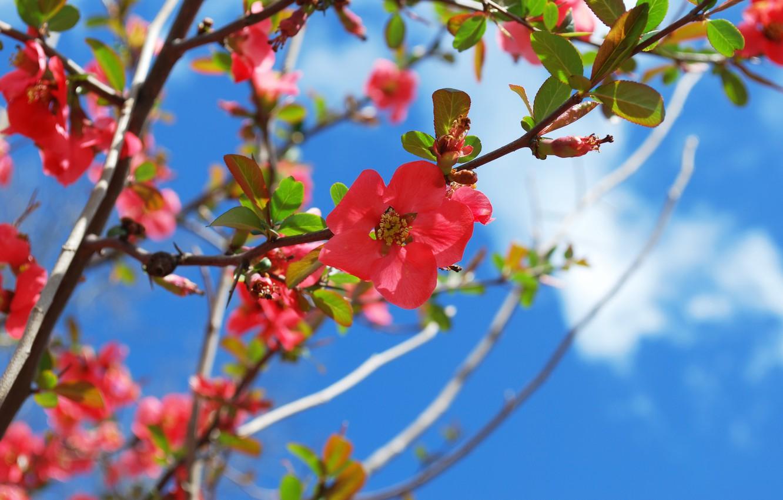 Фото обои весна, цветение, blossom, Spring, Flowering trees