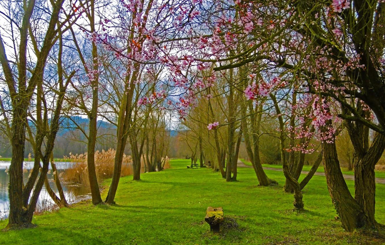 Фото обои озеро, парк, весна, цветение, trees, park, lake, Spring, flowering