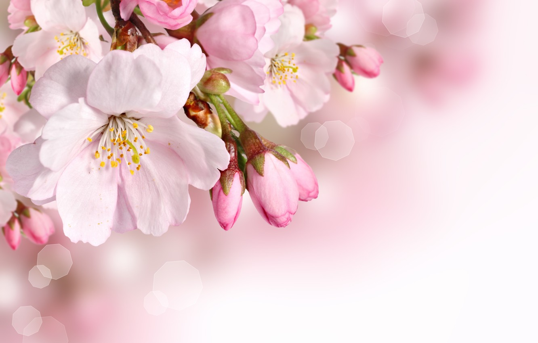 Фото обои цветы, весна, лепестки
