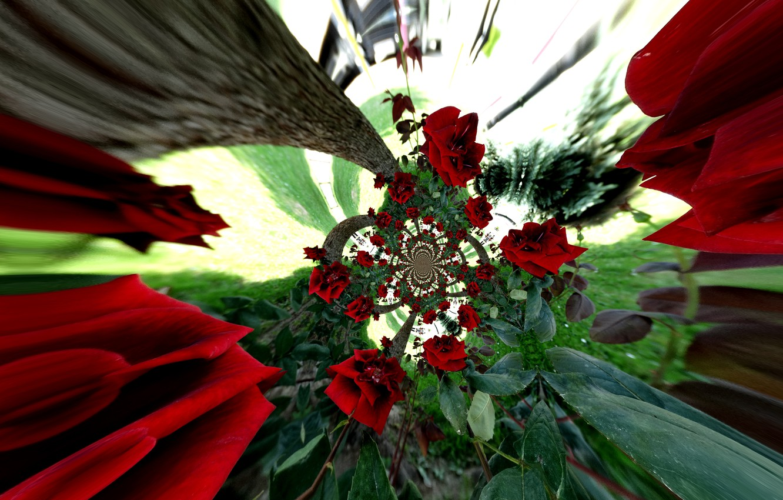 Фото обои red, flower, roses, nice