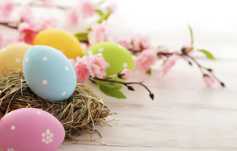 Фото обои цветы, праздник, яйца, ветка, весна, желтые, голубые, зеленые, Пасха, гнездо, розовые, цветение, Easter, пасхальные