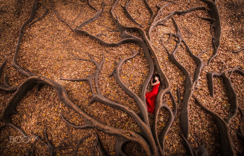 Фото обои осень, девушка, корни, дерево, листва, в красном