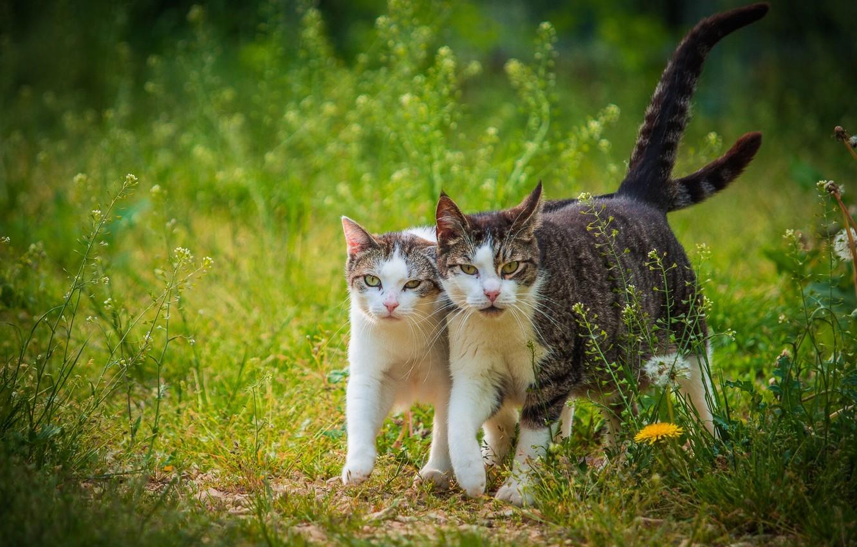 Коты весной гуляют