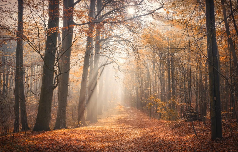 Фото обои осень, лес, туман, утро