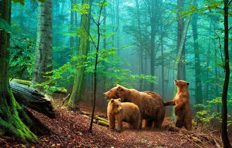 Фото обои лес, медведи, мишки в лесу