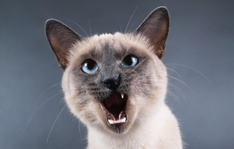 первым истории обои на рабочий стол злая кошка можно скачать все