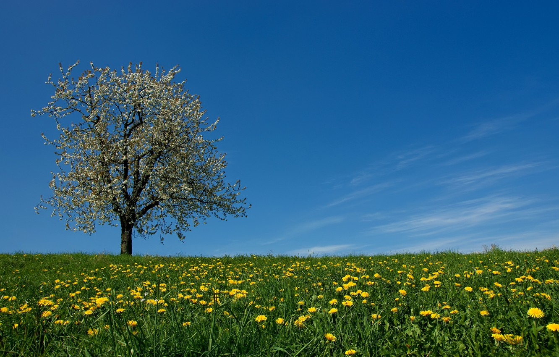Картинка поляна и дерево