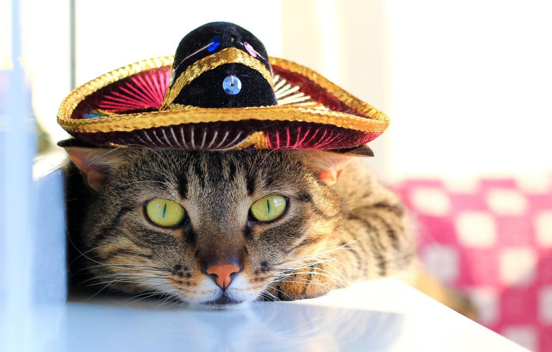 Обои шляпка, Кошка, кот. Кошки foto 19