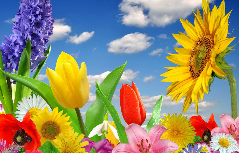 Фото обои бабочки, цветы, весна, colorful, цветение, blossom, flowers, spring, bright
