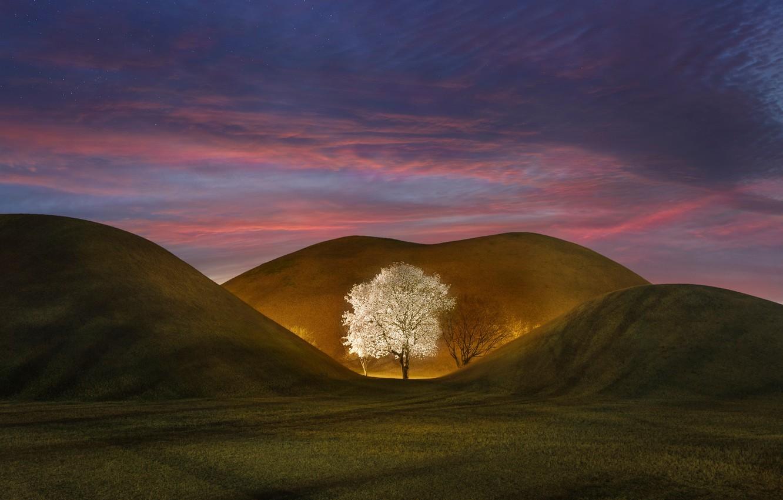 Фото обои небо, звезды, ночь, природа, дерево, холмы, весна, вечер