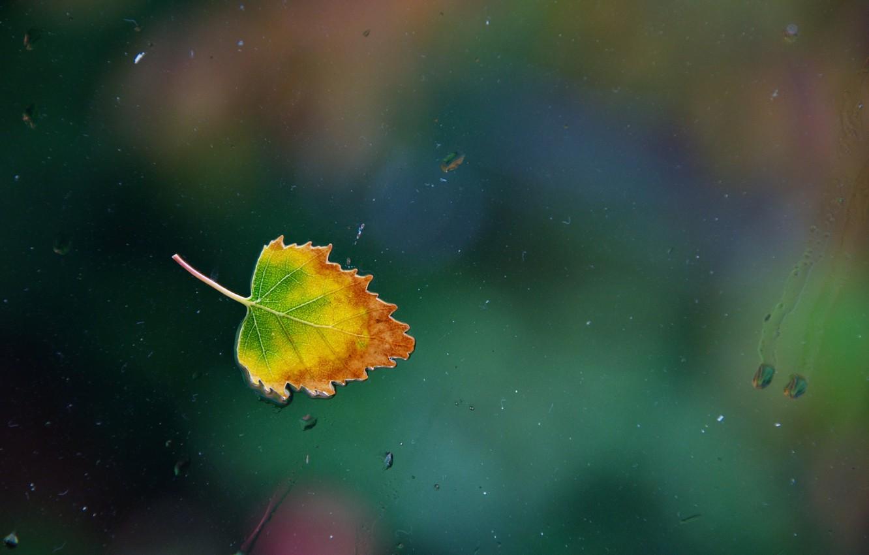 Фото обои стекло, вода, капли, дождь, окно, water, window, leaf, single, Nikon D90, one rainy, осенний лист