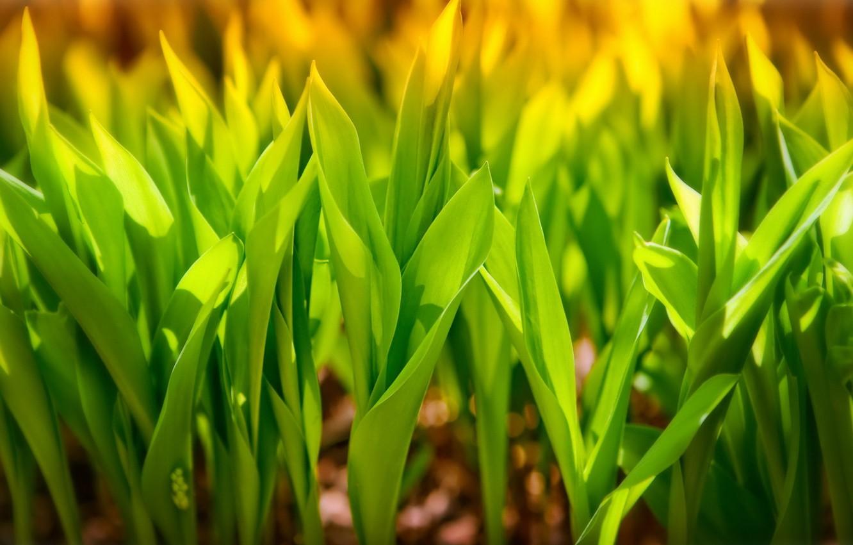 Фото обои зелень, листья, макро, трубочки